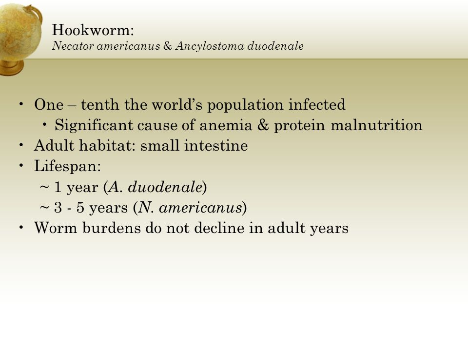 Hookworm: Necator americanus & Ancylostoma duodenale One – tenth the worlds population infected Significant cause of anemia & protein malnutrition Adu