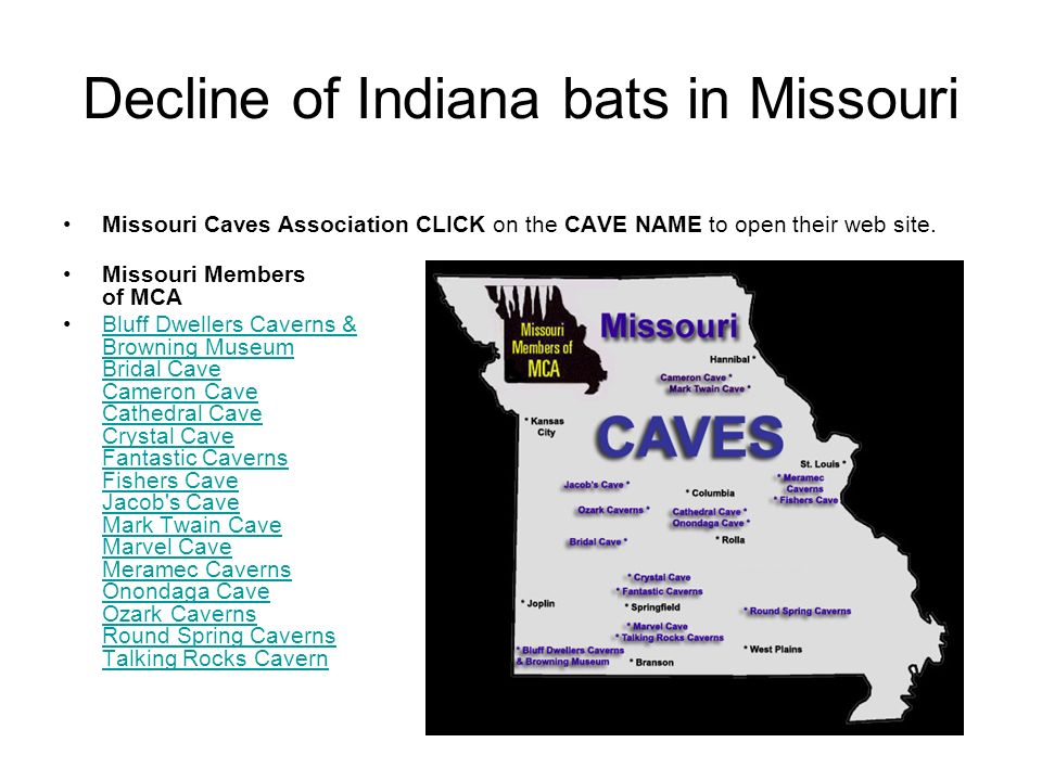 Decline of Indiana bats in Missouri Missouri Caves Association CLICK on the CAVE NAME to open their web site. Missouri Members of MCA Bluff Dwellers C