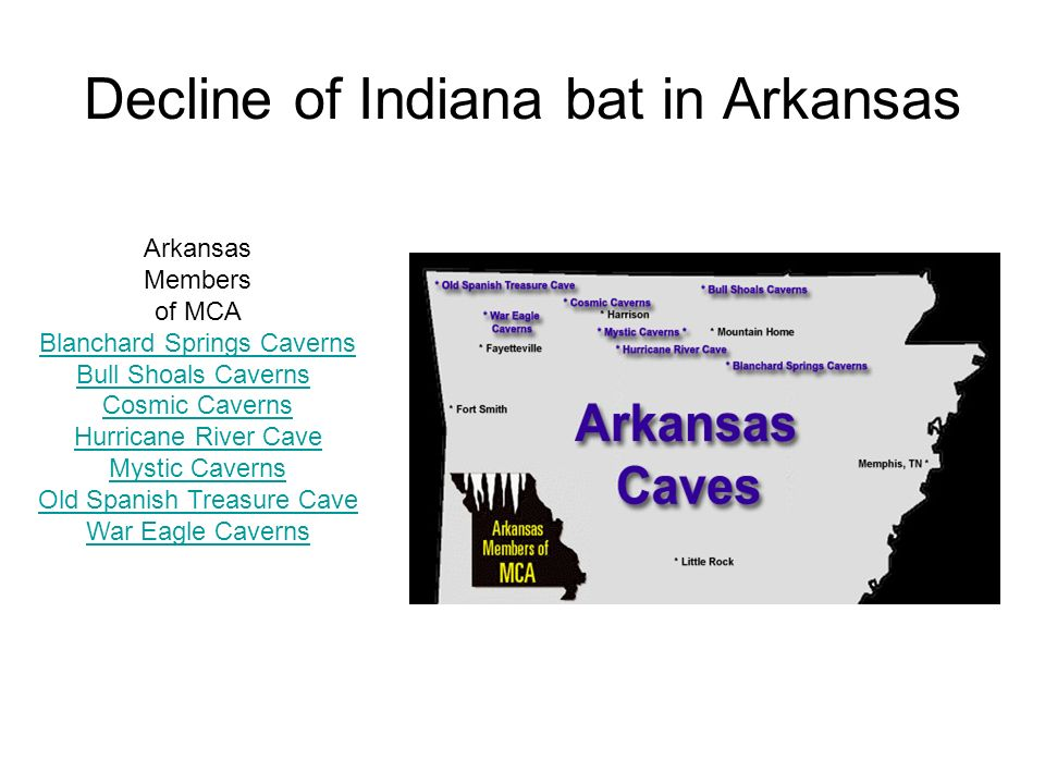 Decline of Indiana bat in Arkansas Arkansas Members of MCA Blanchard Springs Caverns Bull Shoals Caverns Cosmic Caverns Hurricane River Cave Mystic Ca
