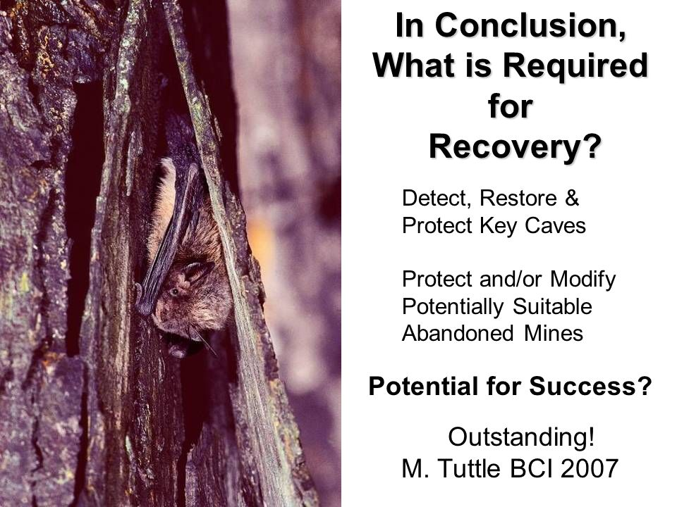 Detect, Restore & Protect Key Caves Protect and/or Modify Potentially Suitable Abandoned Mines Potential for Success? Outstanding! M. Tuttle BCI 2007