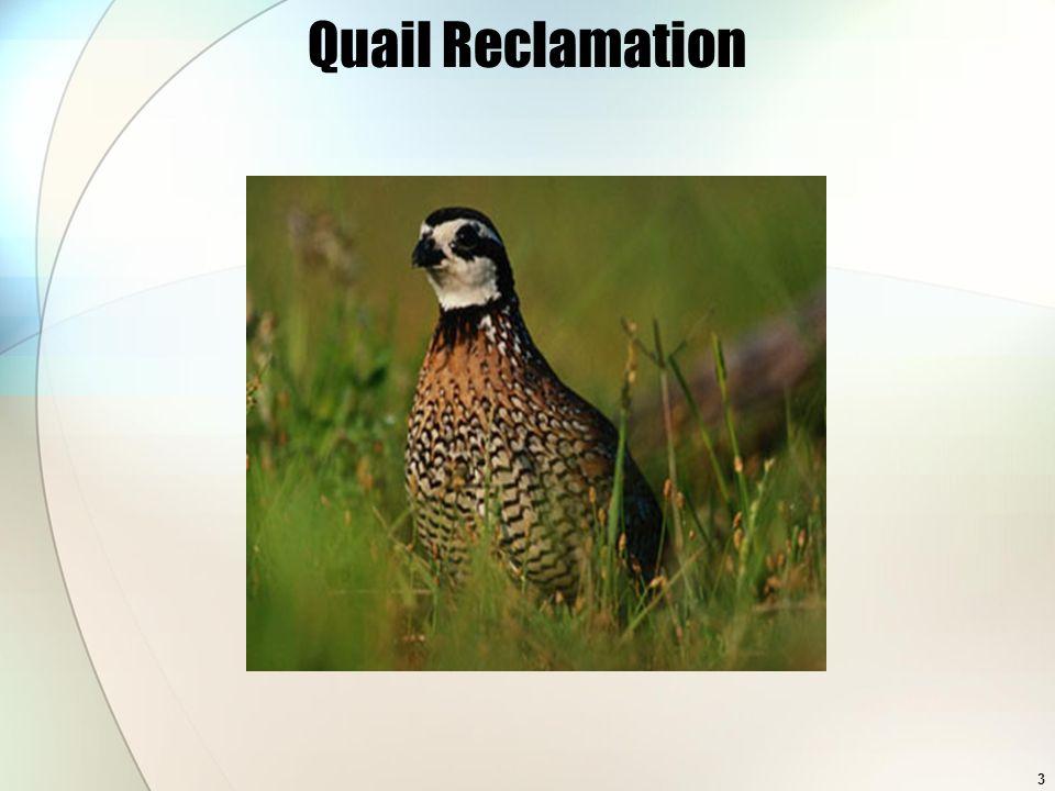 3 Quail Reclamation