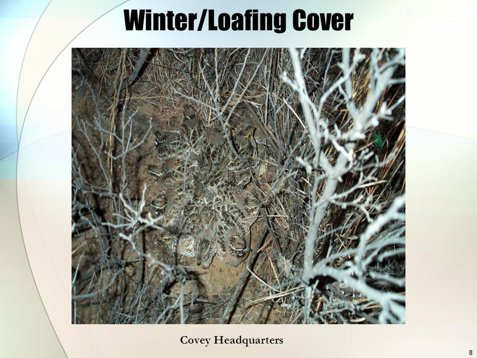 8 Winter/Loafing Cover Covey Headquarters