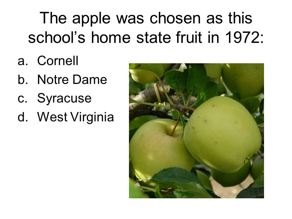 The apple was chosen as this schools home state fruit in 1972: a.Cornell b.Notre Dame c.Syracuse d.West Virginia