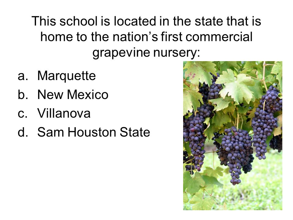 This school is located in the state that is home to the nations first commercial grapevine nursery: a.Marquette b.New Mexico c.Villanova d.Sam Houston State