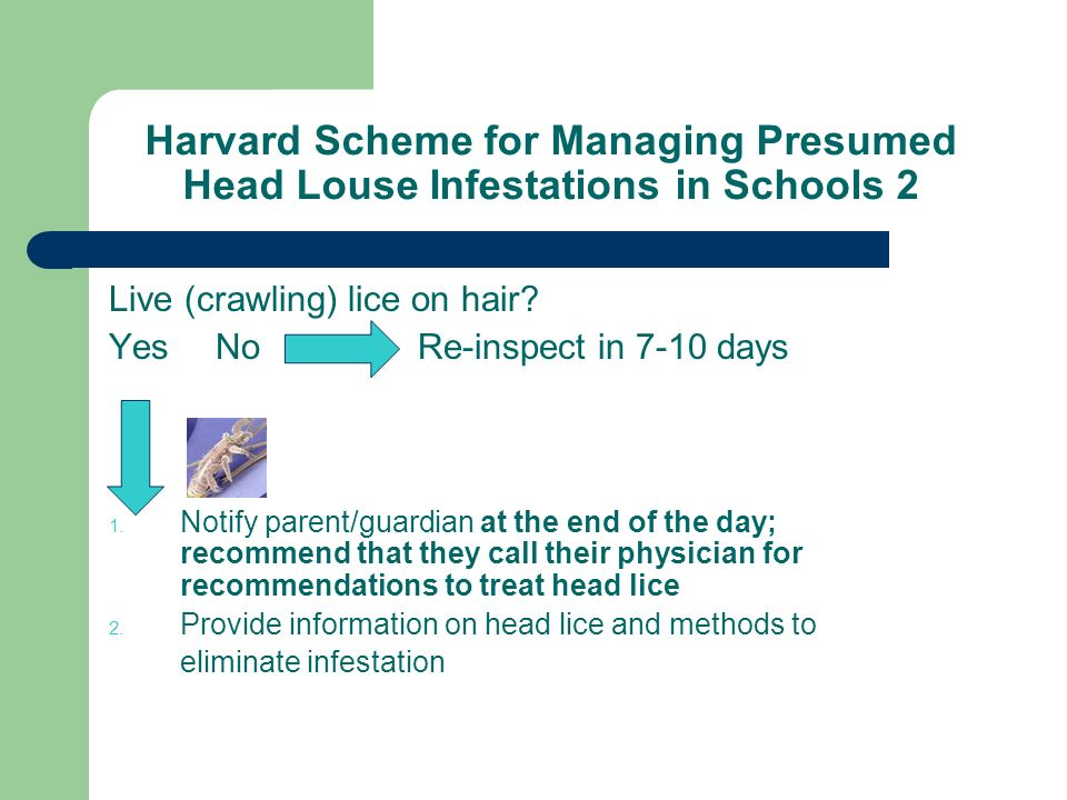 Harvard Scheme for Managing Presumed Head Louse Infestations in Schools 2 Live (crawling) lice on hair? YesNo Re-inspect in 7-10 days Notify parent/gu
