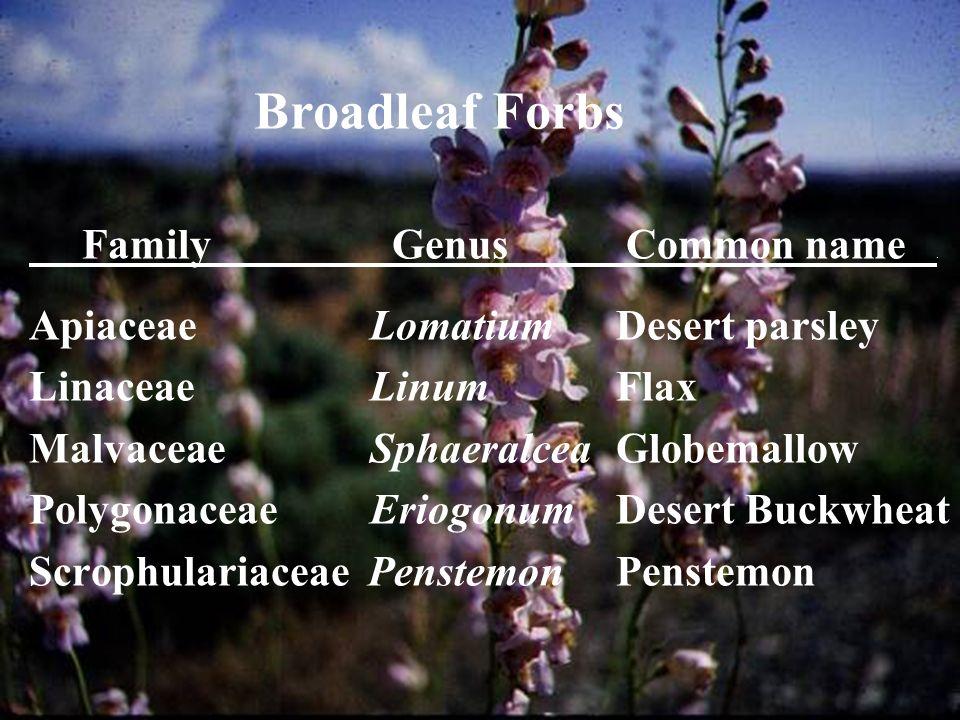 Forbs Family Genus Common name.