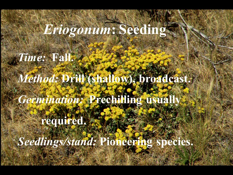 Eriogonum: Seeding Time: Fall. Method: Drill (shallow), broadcast. Germination: Prechilling usually required. Seedlings/stand: Pioneering species.