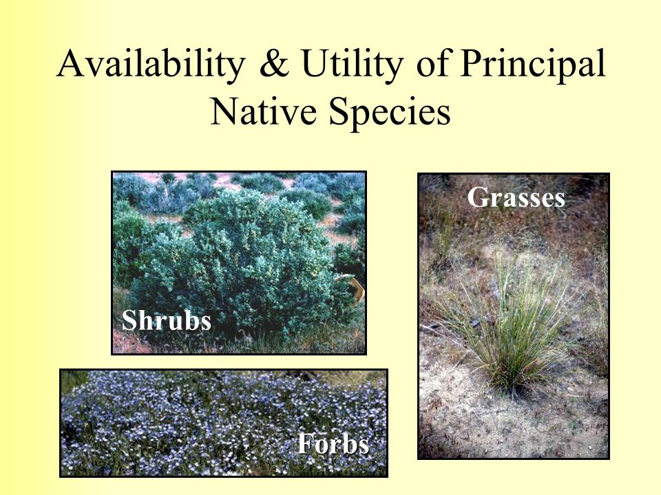 Availability & Utility of Principal Native Species Grasses Forbs Shrubs