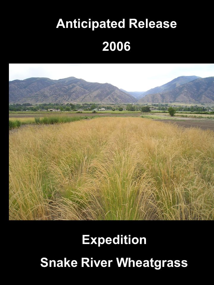 Anticipated Releases 2005 Expedition Snake River Wheatgrass Anticipated Release 2006