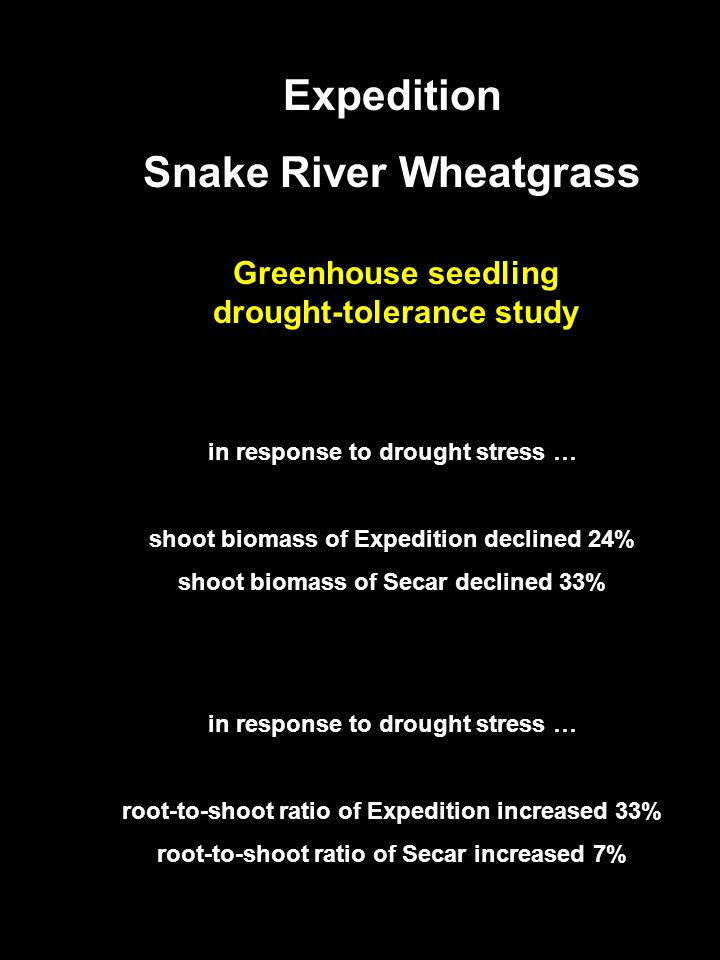 Anticipated Releases 2005 Expedition Snake River Wheatgrass Greenhouse seedling drought-tolerance study in response to drought stress … shoot biomass