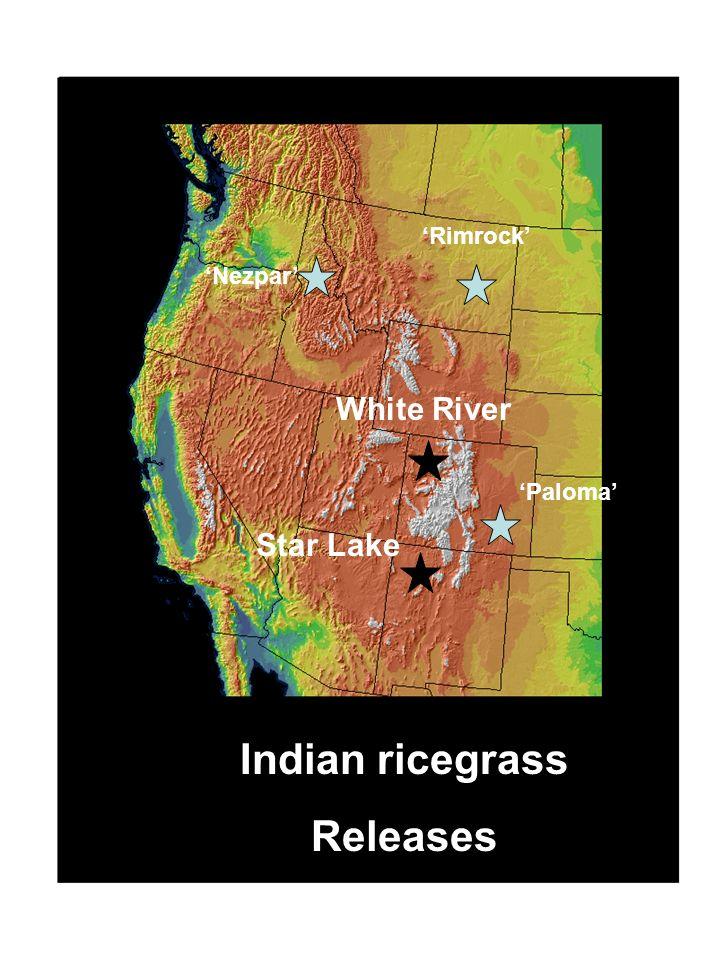 Indian ricegrass Releases Star Lake Nezpar Rimrock Paloma White River