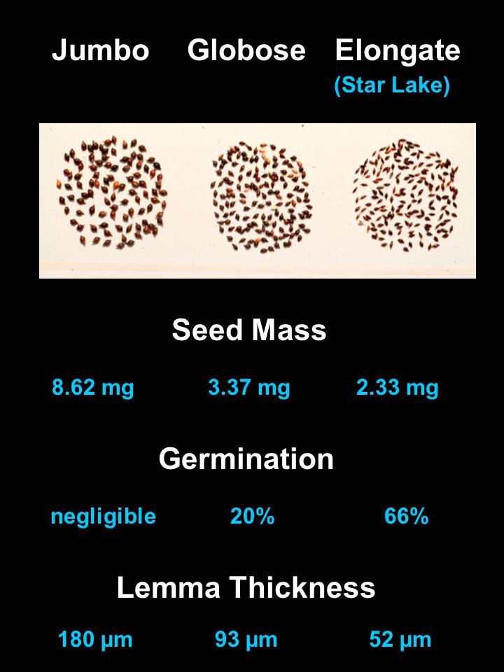 Seed Mass 8.62 mg3.37 mg2.33 mg Lemma Thickness 180 µm93 µm52 µm Germination negligible20%66% JumboGloboseElongate (Star Lake)
