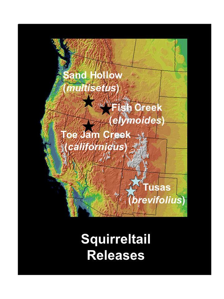 Sand Hollow (multisetus) Toe Jam Creek (californicus) Fish Creek (elymoides) Squirreltail Releases Tusas (brevifolius)