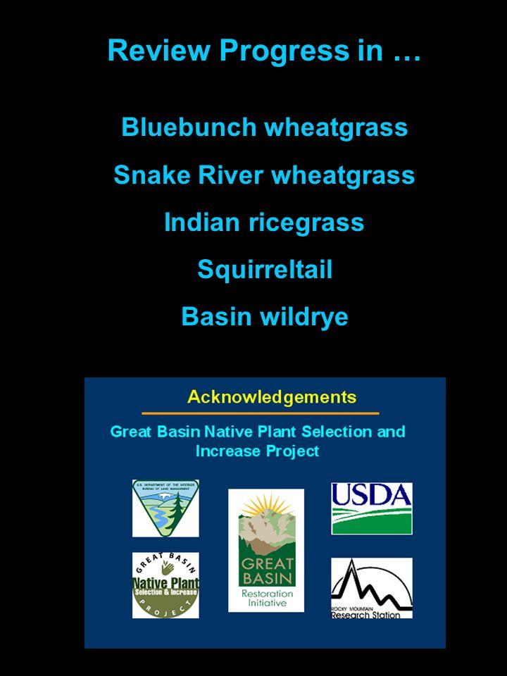 Review Progress in … Bluebunch wheatgrass Snake River wheatgrass Indian ricegrass Squirreltail Basin wildrye