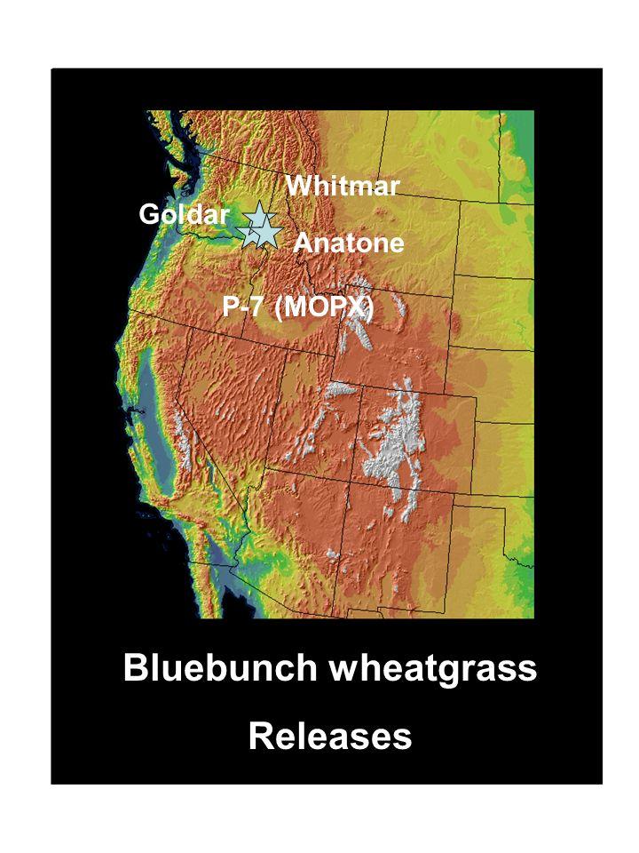 Bluebunch wheatgrass Releases Goldar Whitmar Anatone P-7 (MOPX)