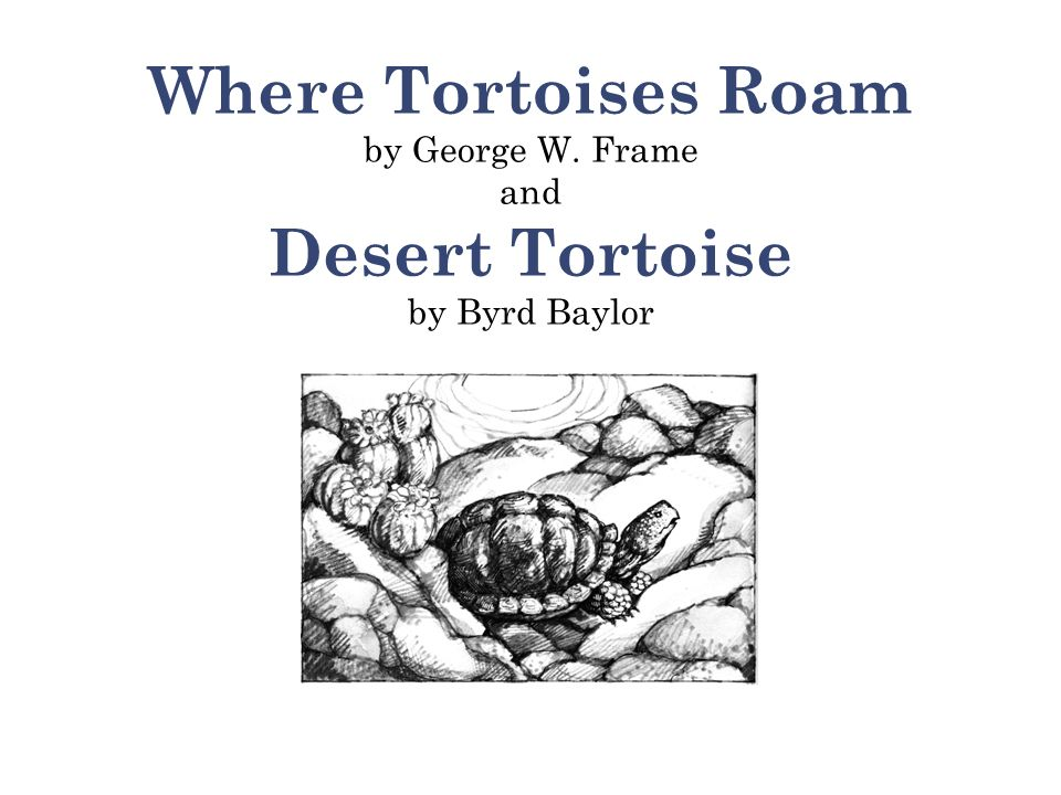 1 According to the selection, which statement is true of the desert tortoise.