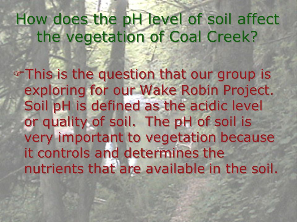 How does the pH level of soil affect the vegetation of Coal Creek? This is the question that our group is exploring for our Wake Robin Project. Soil p