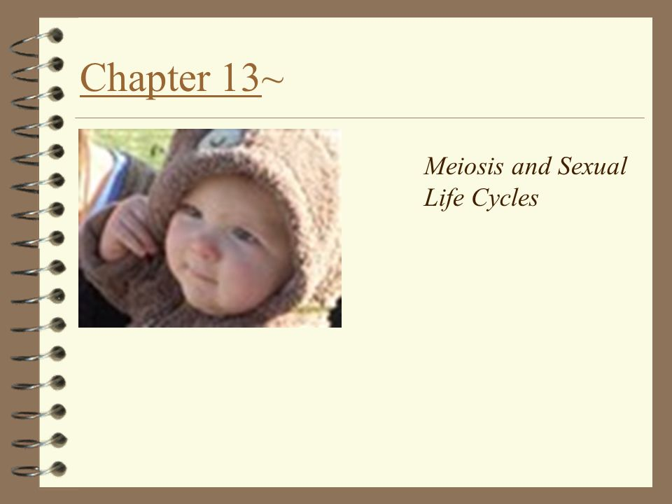 Chapter 13~ Meiosis and Sexual Life Cycles