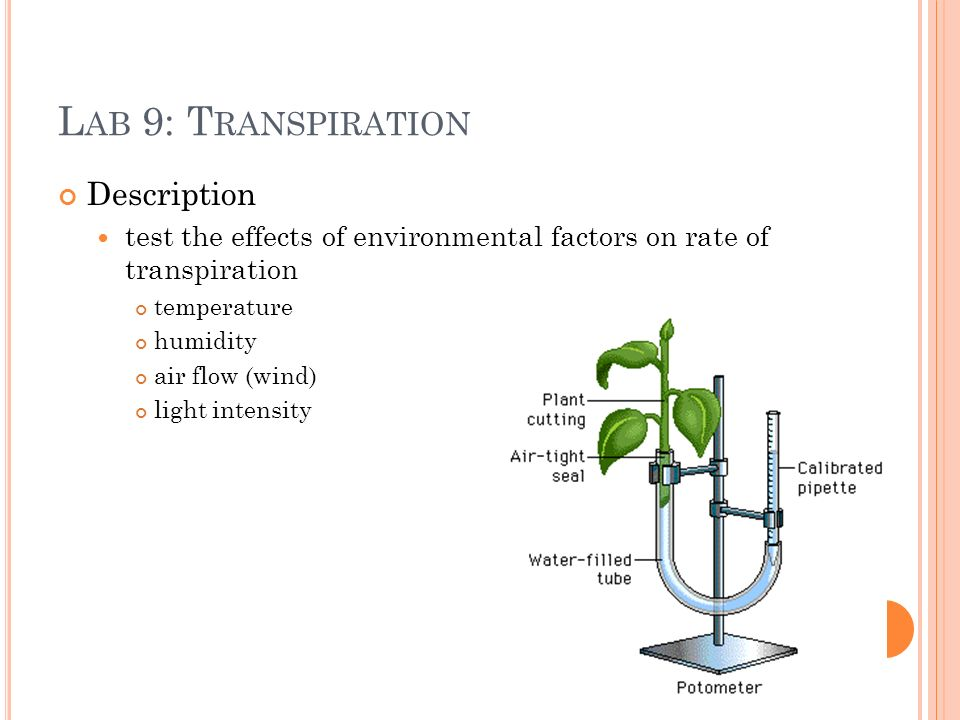 L AB 9: T RANSPIRATION Description test the effects of environmental factors on rate of transpiration temperature humidity air flow (wind) light intensity