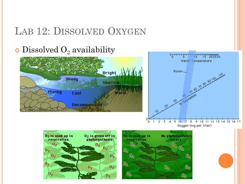 L AB 12: D ISSOLVED O XYGEN Dissolved O 2 availability