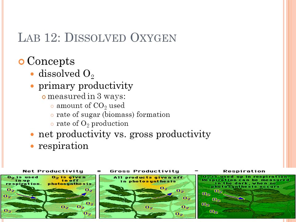 L AB 12: D ISSOLVED O XYGEN Concepts dissolved O 2 primary productivity measured in 3 ways: amount of CO 2 used rate of sugar (biomass) formation rate of O 2 production net productivity vs.