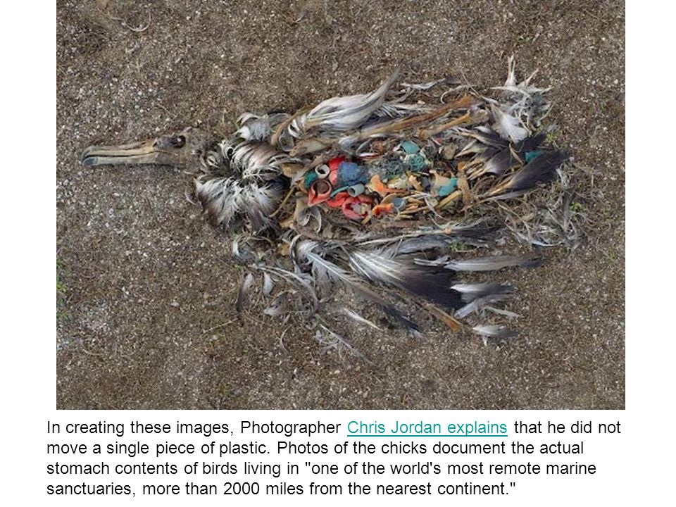 In creating these images, Photographer Chris Jordan explains that he did not move a single piece of plastic.
