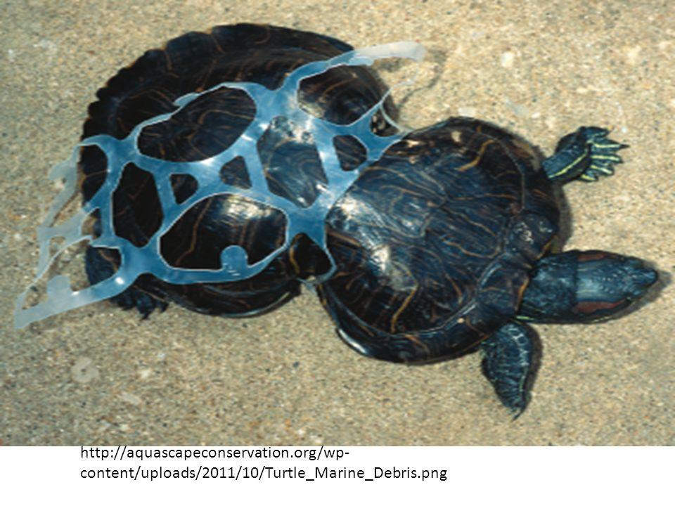 http://aquascapeconservation.org/wp- content/uploads/2011/10/Turtle_Marine_Debris.png