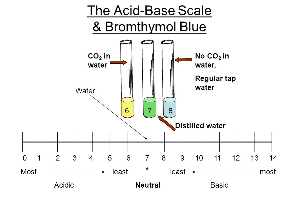 The Acid-Base Scale & Bromthymol Blue 0 1 2 3 4 5 6 7 8 9 10 11 12 13 14 Most leastleastmost Acidic Neutral Basic 6 7 8 Water CO 2 in water No CO 2 in