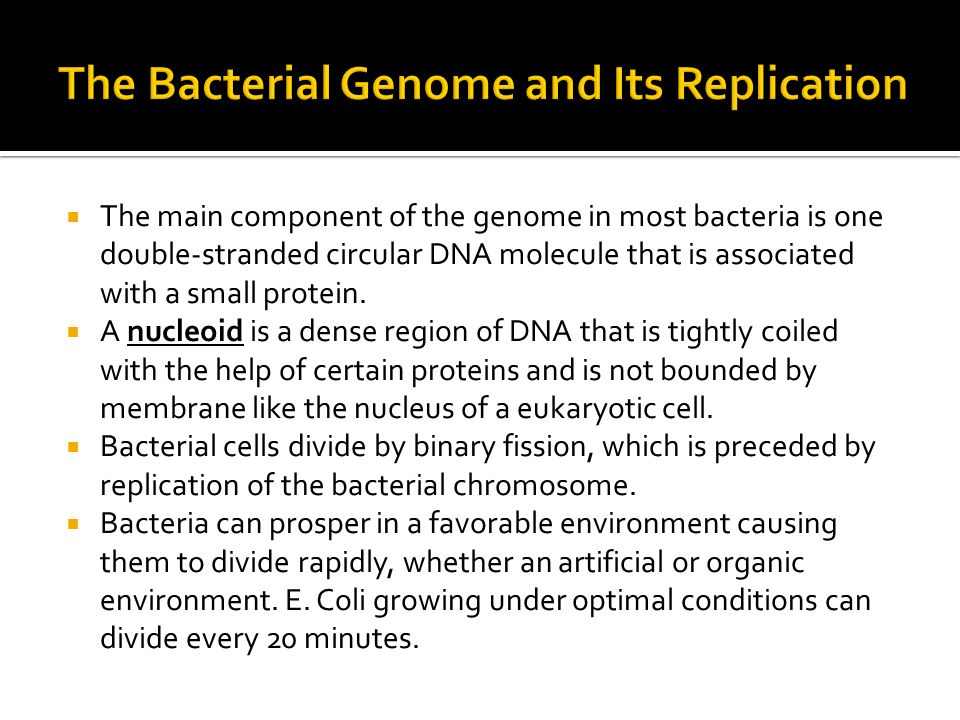 The main component of the genome in most bacteria is one double-stranded circular DNA molecule that is associated with a small protein. A nucleoid is