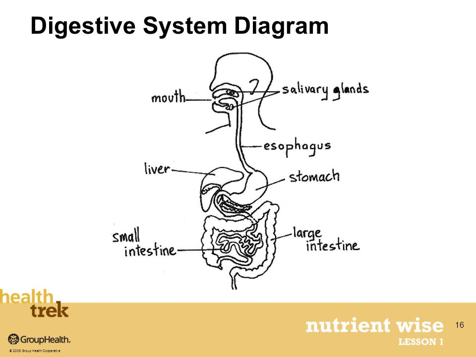 Digestive System Diagram © 2009 Group Health Cooperative 16