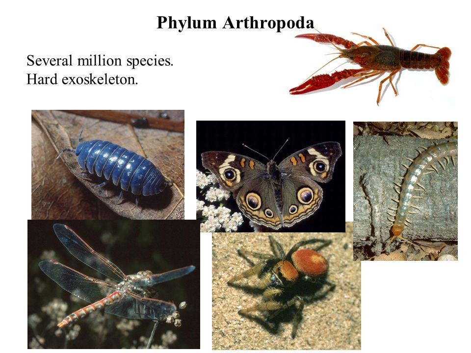Several million species. Hard exoskeleton.