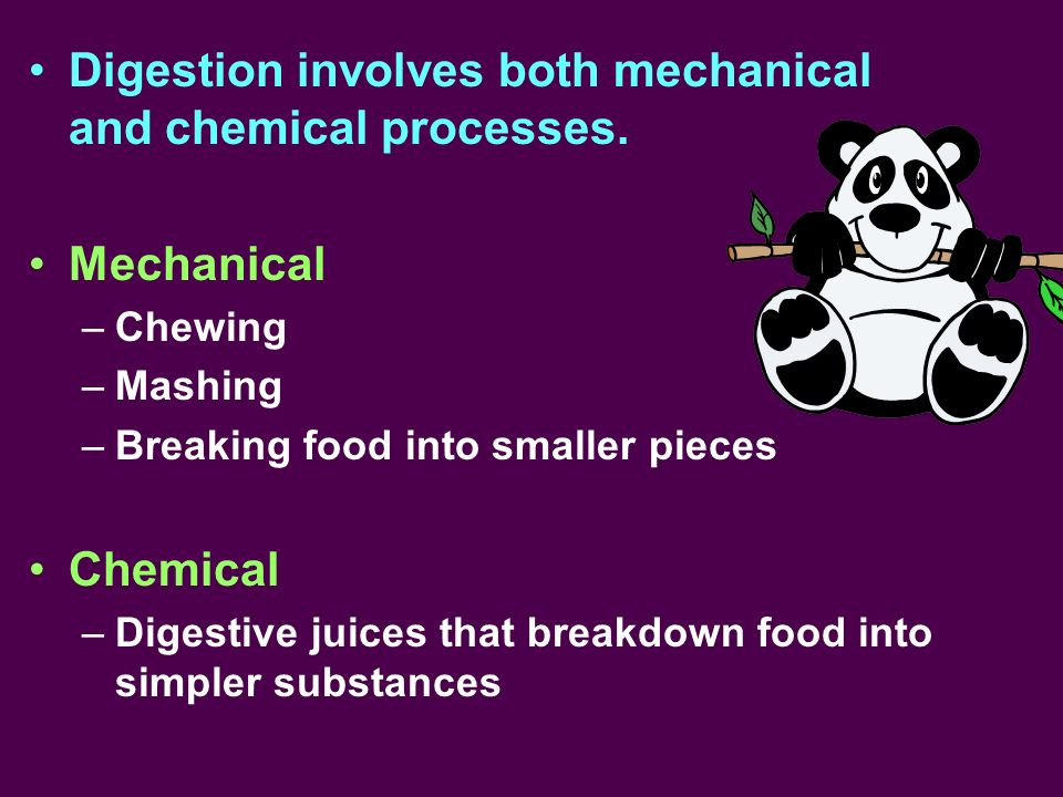 Digestion involves both mechanical and chemical processes.