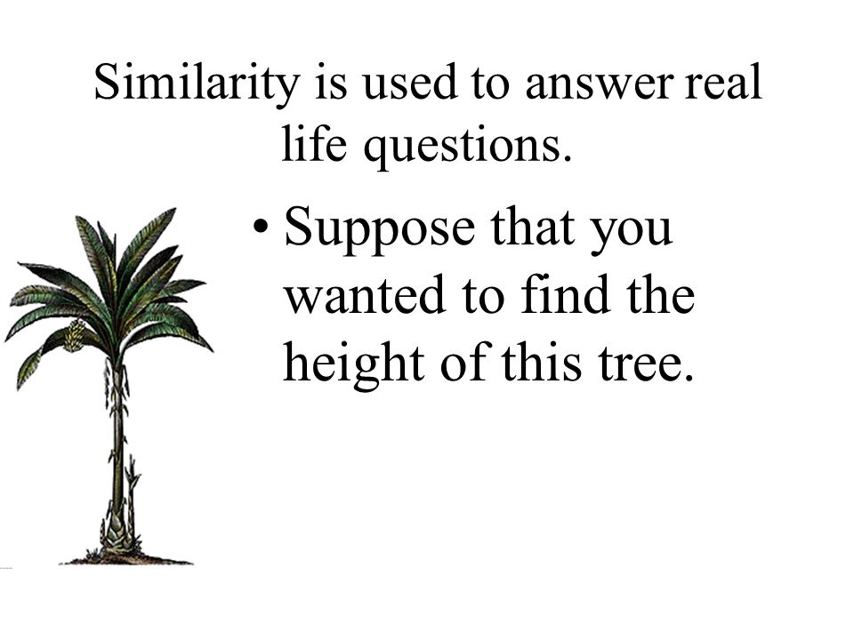 Similarity is used to answer real life questions. Suppose that you wanted to find the height of this tree.
