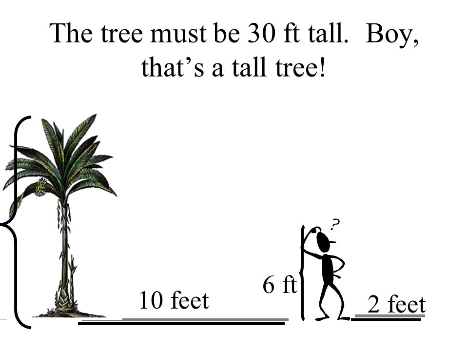 The tree must be 30 ft tall. Boy, thats a tall tree! 10 feet 2 feet 6 ft