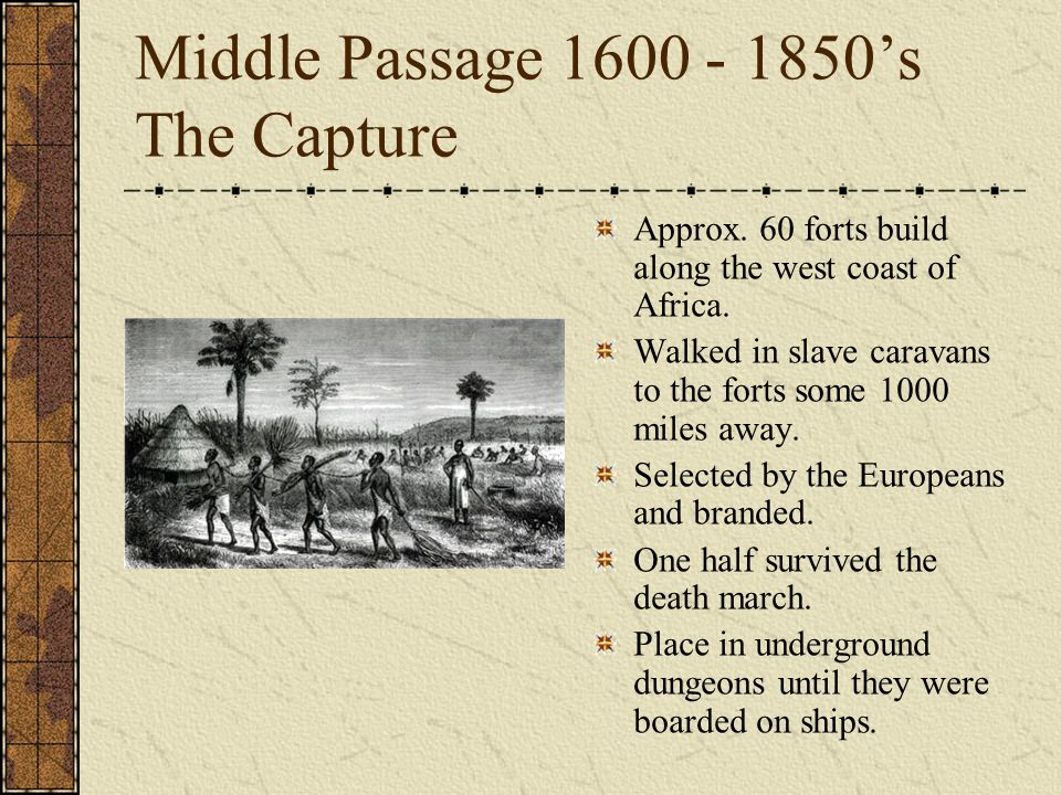 Middle Passage 1600 - 1850s The Capture Approx. 60 forts build along the west coast of Africa. Walked in slave caravans to the forts some 1000 miles a