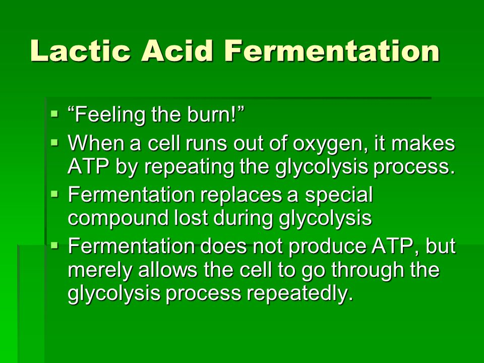 Lactic Acid Fermentation Feeling the burn.Feeling the burn.