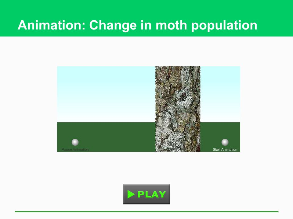 Animation: Change in moth population