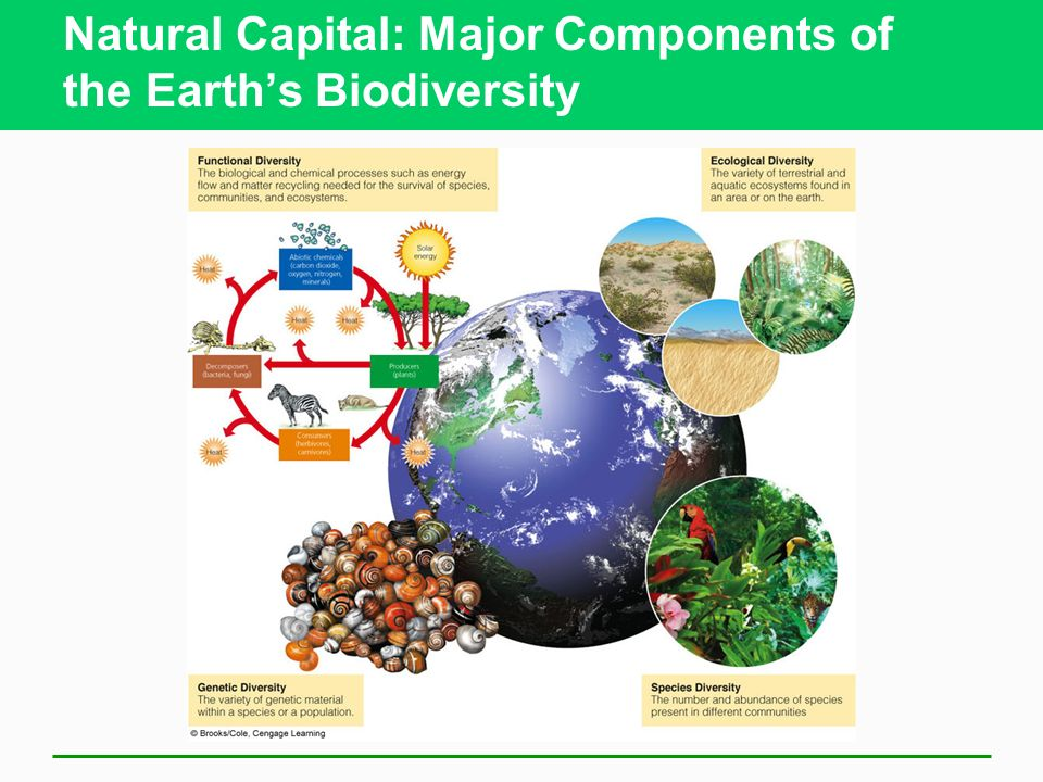 Natural Capital: Major Components of the Earths Biodiversity