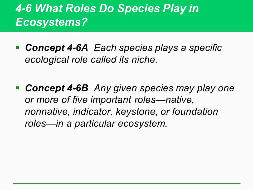 4-6 What Roles Do Species Play in Ecosystems? Concept 4-6A Each species plays a specific ecological role called its niche. Concept 4-6B Any given spec