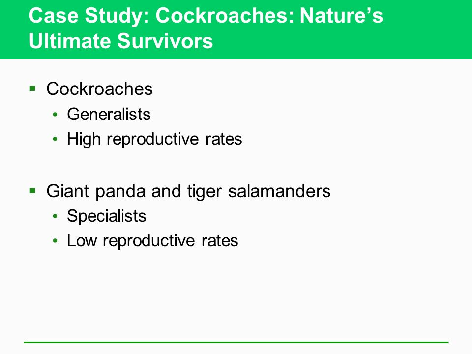 Case Study: Cockroaches: Natures Ultimate Survivors Cockroaches Generalists High reproductive rates Giant panda and tiger salamanders Specialists Low