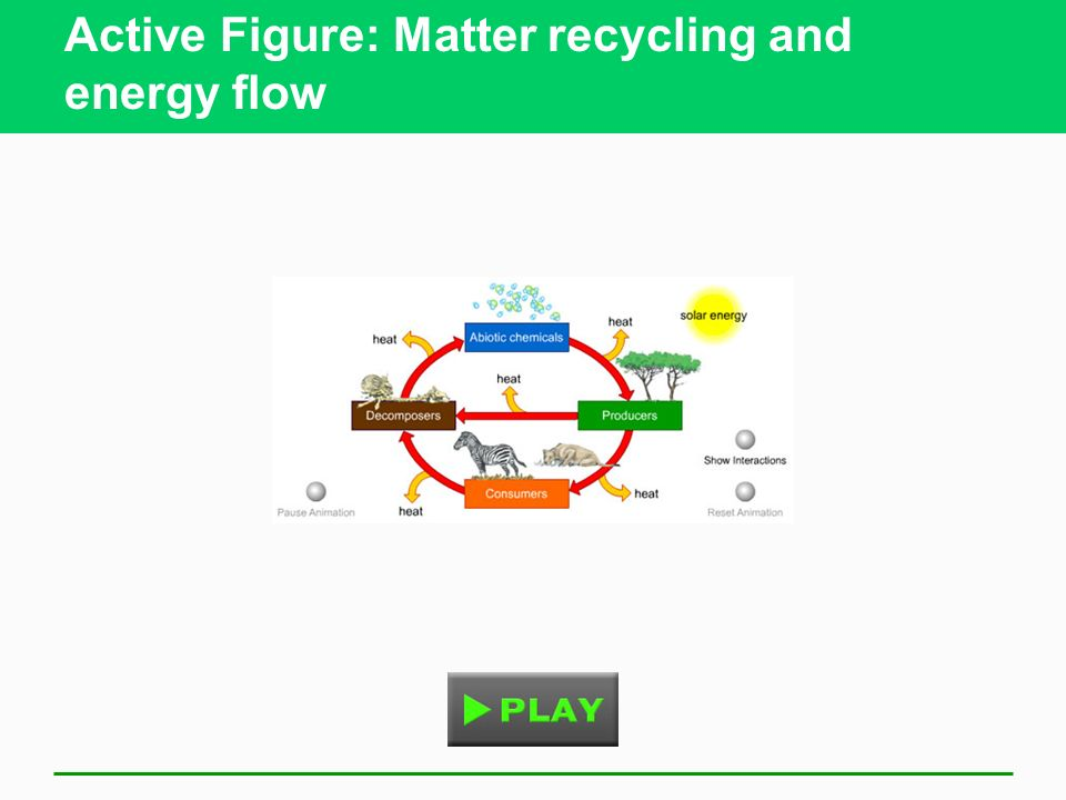 Active Figure: Matter recycling and energy flow