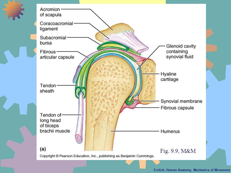Frolich, Human Anatomy, Mechanics of Movement Fig. 9.9, M&M