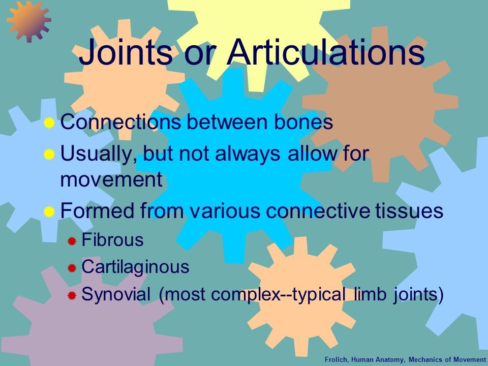 Frolich, Human Anatomy, Mechanics of Movement Joints or Articulations Connections between bones Usually, but not always allow for movement Formed from