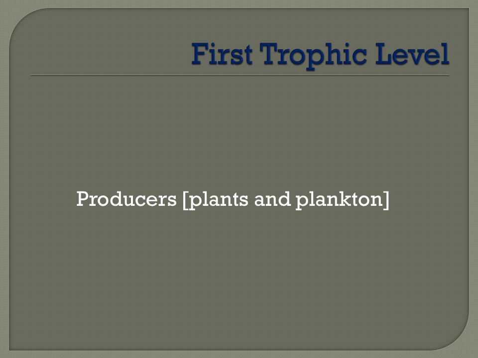 Producers [plants and plankton]