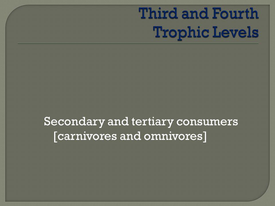 Secondary and tertiary consumers [carnivores and omnivores]