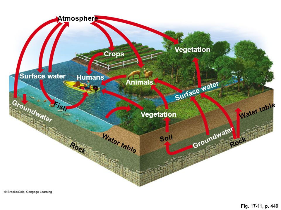 Fig. 17-11, p. 449 Atmosphere Crops Vegetation Surface water Humans Animals Groundwater Fish Surface water Vegetation Water table Soil Rock Groundwate