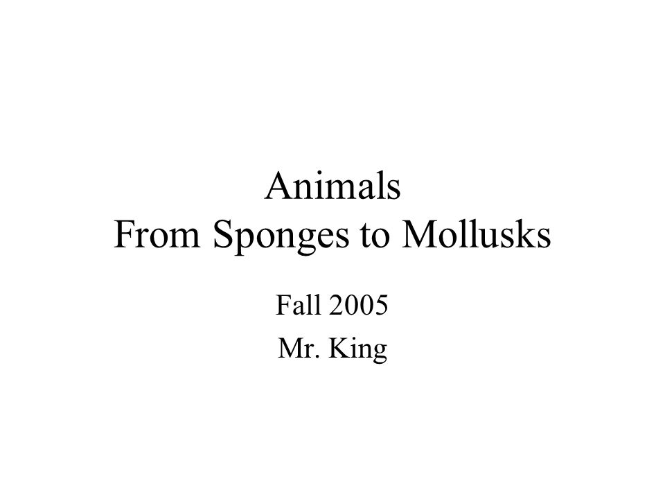 Animals From Sponges to Mollusks Fall 2005 Mr. King