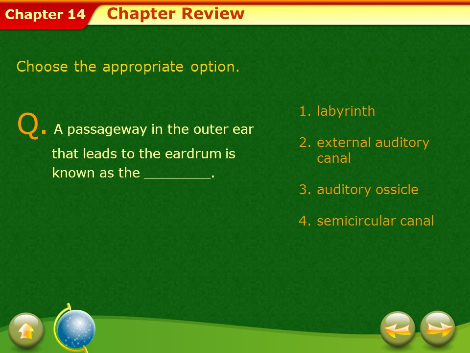 Chapter 14 1.labyrinth 2.external auditory canal 3.auditory ossicle 4.semicircular canal Q. A passageway in the outer ear that leads to the eardrum is