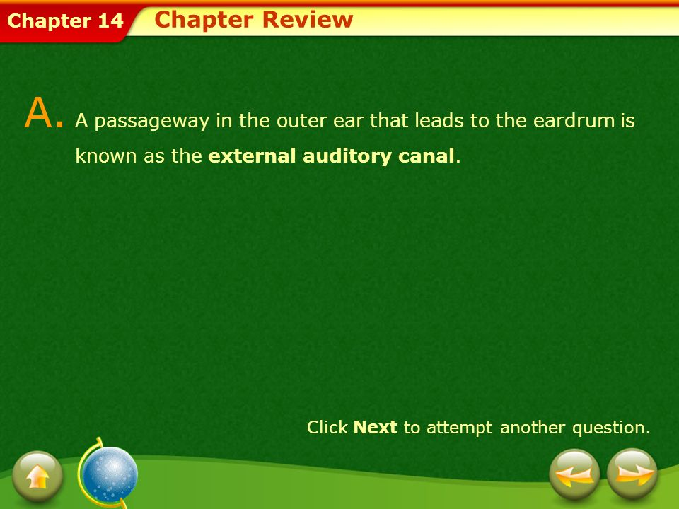 Chapter 14 A. A passageway in the outer ear that leads to the eardrum is known as the external auditory canal. Click Next to attempt another question.