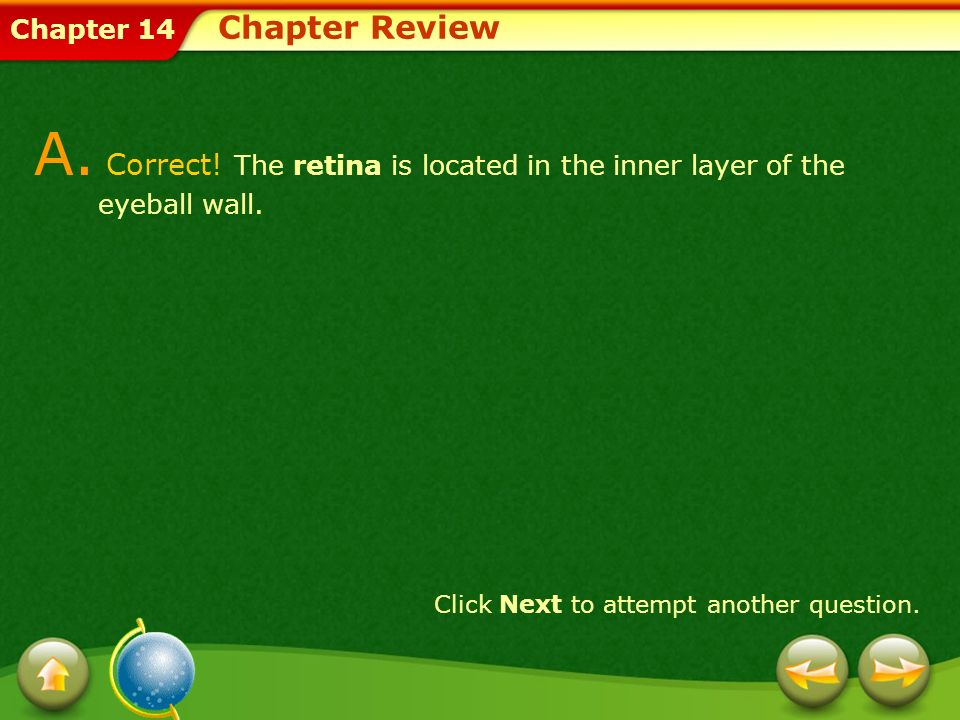 Chapter 14 A. Correct! The retina is located in the inner layer of the eyeball wall. Click Next to attempt another question. Chapter Review